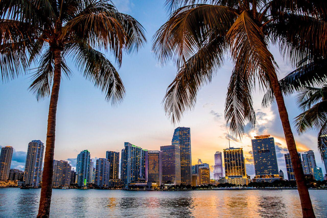 palm trees viewing miami from across the water